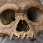'Dragon Man': Discovery of Man's Nearest Ancestor